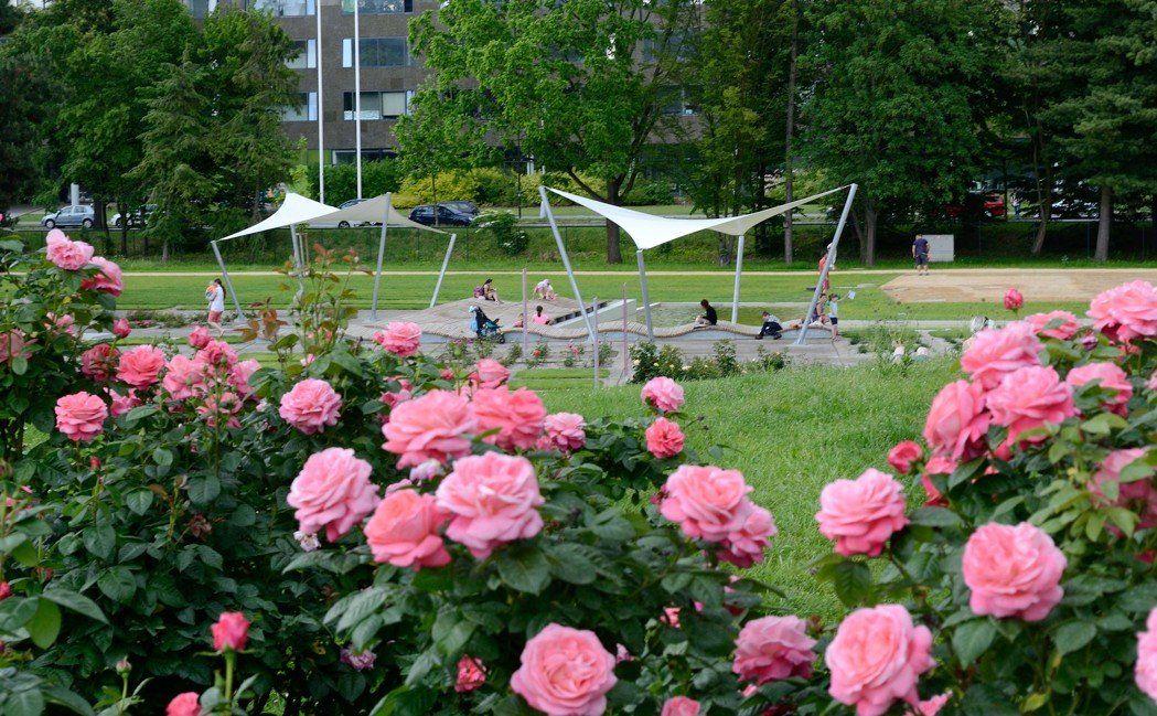 Rozárium Olomouc [foto Flora Olomouc]